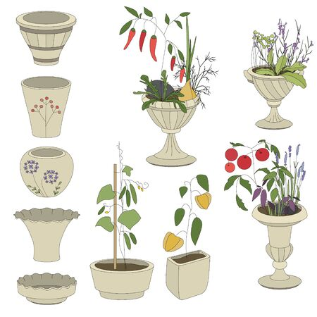 clay pot: Flower pots with vegetables - herbs,tomatos,pepper,cucumber isolated on white Illustration