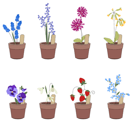 garden patio: Flower pots with flowers - muscari,primrose and viola. Plants growing on window sills and balcony