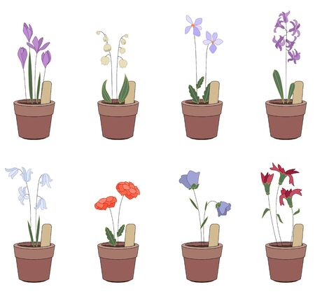 plants growing: Flower pots with flowers - iris, hyacinthus, bluebell. Plants growing on window sills and balcony