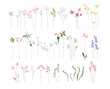 herbage: Collection of different stylized flowers and forest herbs Illustration