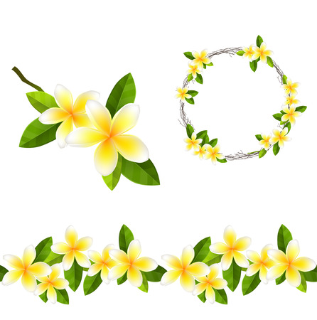 flores exoticas: Floreciente rama de árbol de frangipani. pincel de modelo sin fin, guirnalda alrededor. Vectores