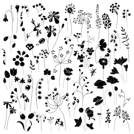 monochromatic: Collection of stylized herbs and plants.  Black and white silhouette. Pattern for your design, romantic greeting cards, announcements, posters. Illustration