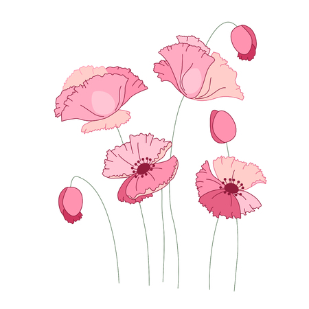 Stylized pink poppy isolated on white background. Object for your summer design, fabrics, greeting cards, announcements, posters.