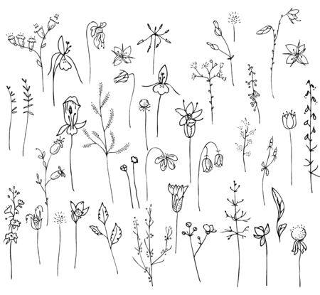 botany: Collection with stylized forest flowers and herbs isolated on white.  Black and white silhouette. Objects for your design, announcements, greeting cards, posters, advertisement.