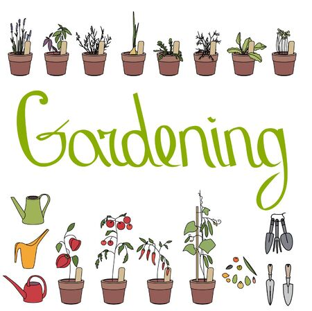 flower pots: Flower pots with herbs and vegetables. Gardening tools. Text Gardening.