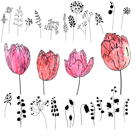 Set with pink and red tulips isolated on white. Watercolor effect.Flowers, plants and herbs - black silhouettes. Illustration