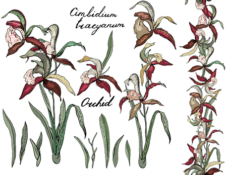 Isolated orchid cimbidium on white. Ilustrace