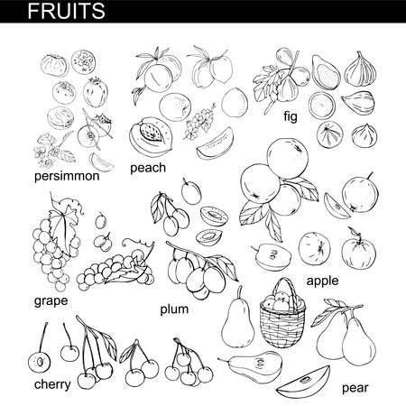 Collection with different fresh season fruits Ilustração
