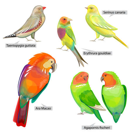 Set with different birds that can be used for living in cages. Real Latin titles. Illustration for books about animals and wild life.