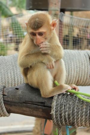 Little Monkey Stock Photo - 18007594