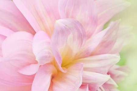 campo de flores: Suave-foco primer plano de flores de color rosa