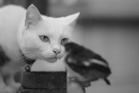 envisage: Cat look a little bird black and white .