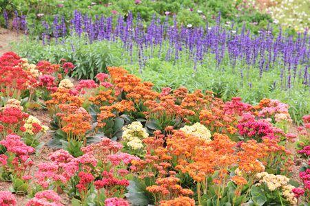 flower head: Multicolored flower bed in garden. Stock Photo