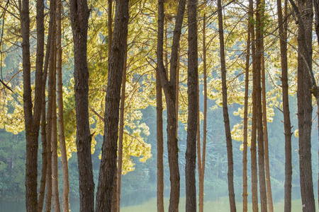 Tranquil scenery of lakeside forest Stock Photo