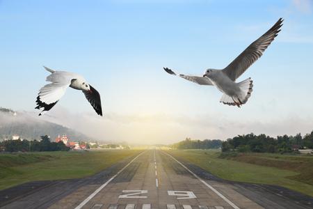 Seemöwen, die über die Flughafenrollbahn mit Berg in der Landschaft fliegen