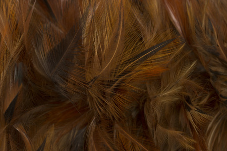 close up of feather duster