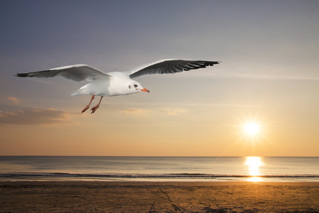 Seagulls flying over the sea in the evening time. 写真素材
