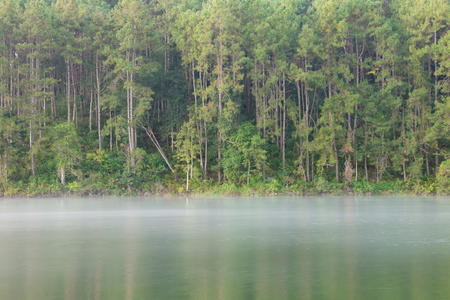 Tranquil scenery of lakeside forest- selective focus.