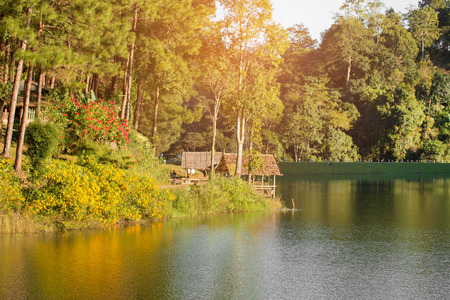 Tranquil scenery of lakeside forest Stockfoto