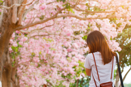 woman standing back and look at the pink flower blossom Stockfoto