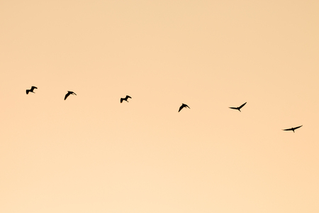 silhouette group of birds flying - vintage style
