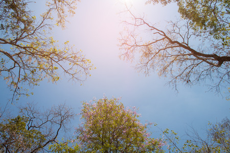 tree branch abstract background with blue sky