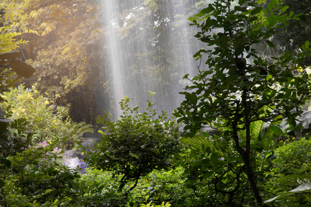 waterfall in the forest Stockfoto