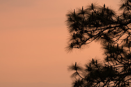 silhouette of tree with sunrise in the morning, dramatic stunning light