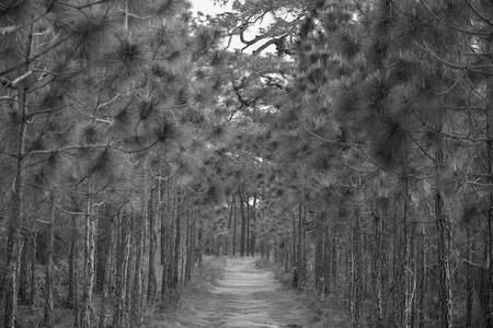 wild paths in the forest - black and white tone Stockfoto