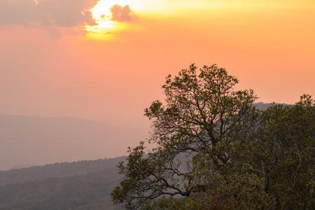 beautiful scene, tree top of the mountain in evening time