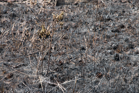 forest after a fire has passed through Stockfoto