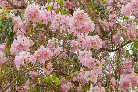 pink flower blossom in the garden Stockfoto