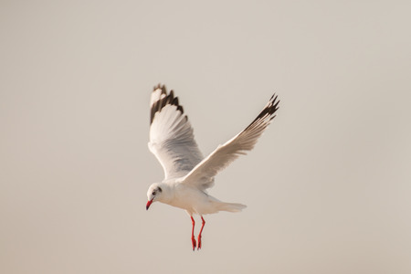 seagull flying among on the sky in evening time