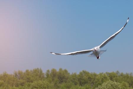 Seagulls flying among blue sky.
