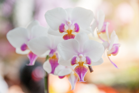 Orchids flowers for decoration in the garden. Stockfoto