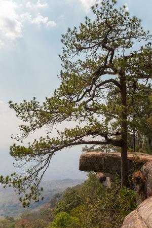 beautiful scene of lomsak cliff is a landmark at phukradung national park of Thailand.