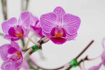 Close - up of orchids flowers