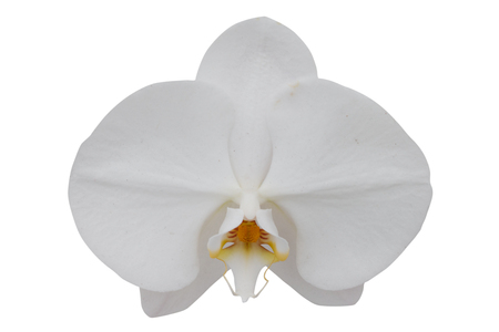 orchid flower isolated on white background - clipping paths Stockfoto