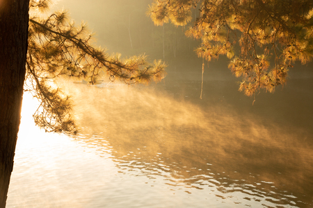 Tranquil scenery of lakeside forest in the morning - selective focus.