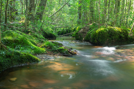 calm mountain water stream flowing in green forest  - selective focus. Stockfoto - 119500670