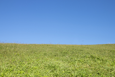 green grass field and blue sky background. Stockfoto - 119500743