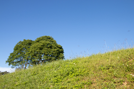 green grass field and tree with blue sky background. Stockfoto - 119504866