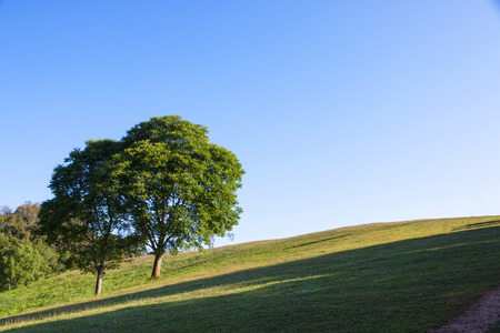 tree and green grass field with blue sky background. Stockfoto - 119504957