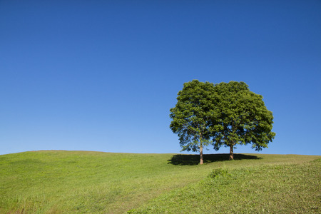 tree and green grass field with blue sky background. Stockfoto