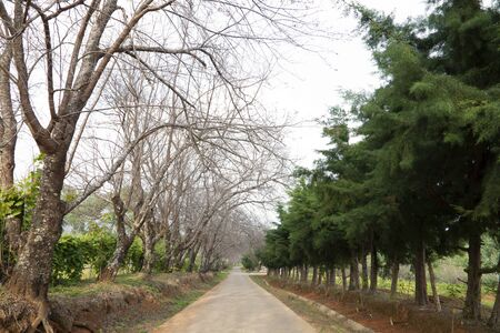 Walkway lane path with trees.