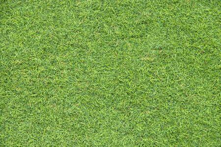 green grass texture as background.