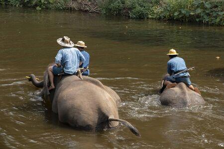 People bathe elephants in a river, Thai elephants taking a bath with mahout.
