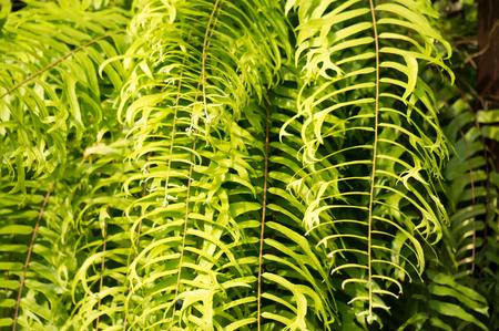 Green fern in forest