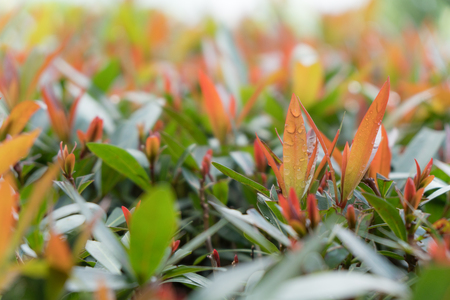 Green leaf and red leaf with blur background