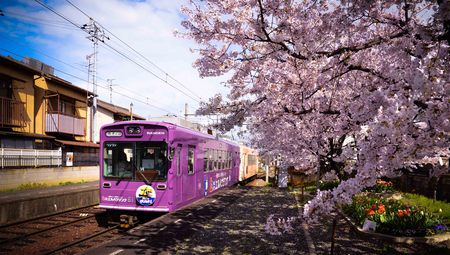 Classic tram train from JR station to Arashiyama during cherry blossoms blooming season in Kyoto